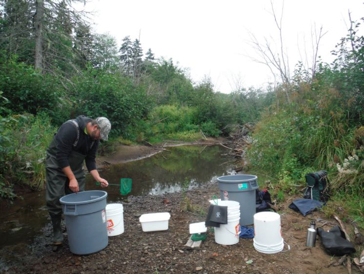 Electrofishing Survey on CBC News