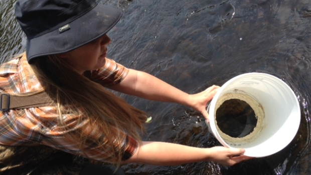 Rare freshwater mussel eludes conservation group